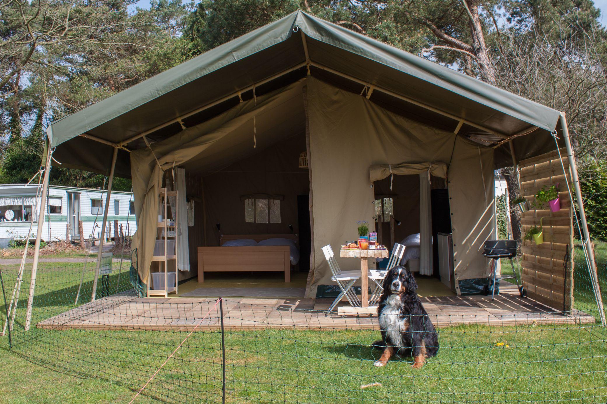 6x Inspirerende Boomhutten : 6x glampings waar je hond ook welkom is glampings